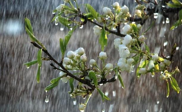 Погода в Туле 23 марта: дождь, облачность и потепление