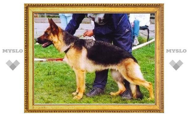 В Новомосковске выберут лучшую служебную собаку
