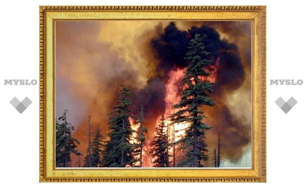Число жертв пожаров в России выросло до 50 человек