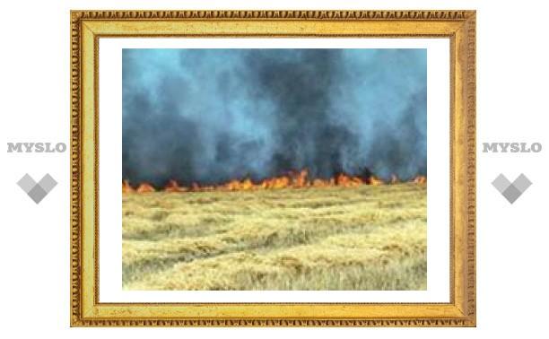 Запас зерна в Тульской области погибает