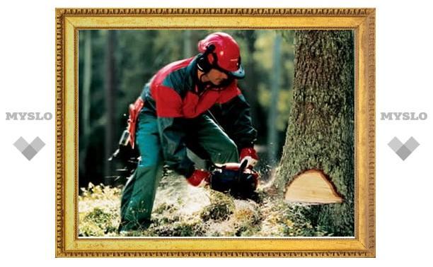 Спиливание одного дерева обойдется Туле в 25000 рублей