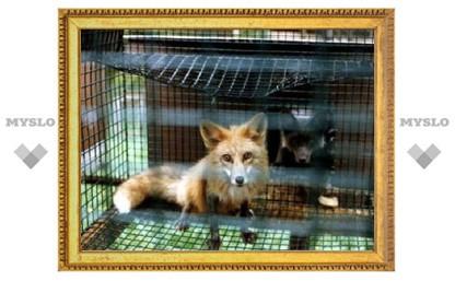 В Новомосковске гаишники нашли прицеп с дикими зверями