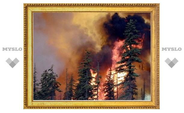 Прокуратура занялась расследованием лесных пожаров в Тульской области