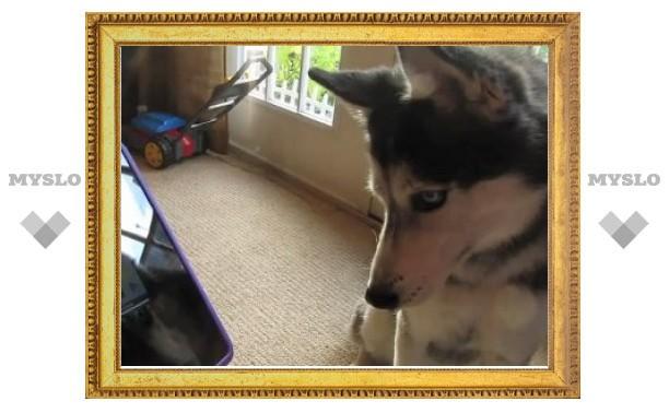 Собака записала хит с помощью эффекта Auto-Tune