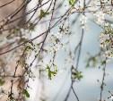Погода в Туле 18 мая: дождь с грозой, ветер и низкое давление