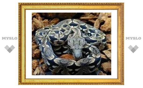 В Туле нашли мадагаскарскую змею