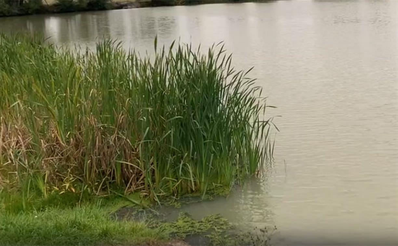 Дохлая рыба и неприятный запах от пруда: жители Узловского района обратились за помощью к экологам