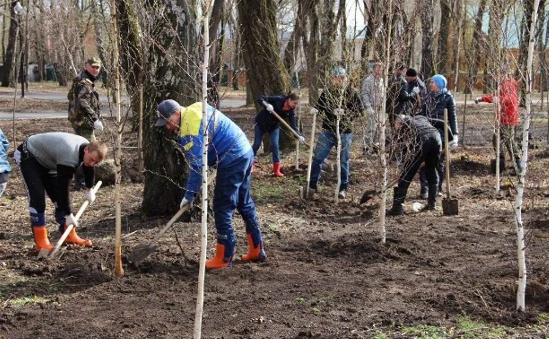 Осенью в Туле высадят более трех тысяч деревьев