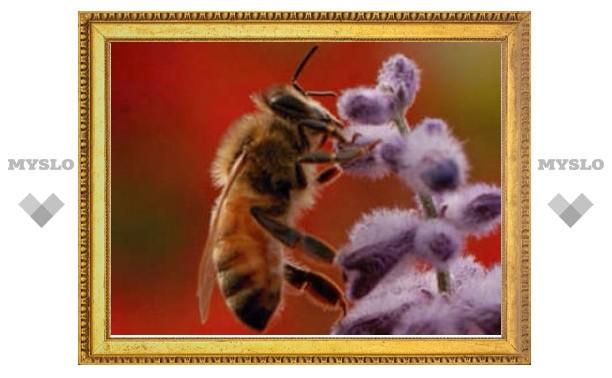 Обоняние пчел оказалось основано на принципе бритвы Оккама