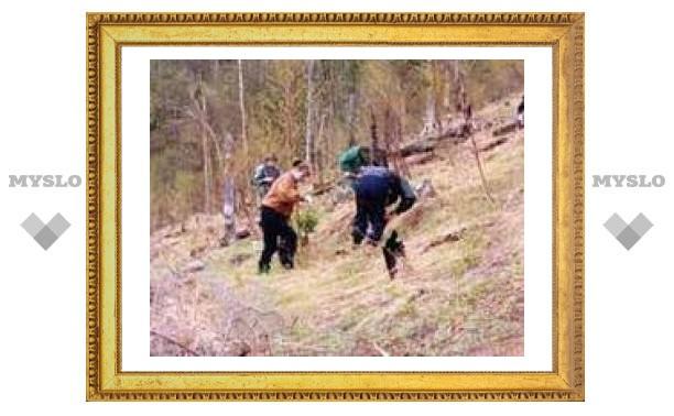 В Центральном районе высадят 500 деревьев