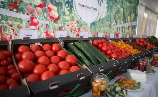 Щекинцы накормят туляков и москвичей помидорами и огурцами