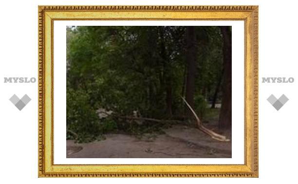 Упавшее дерево раздавило машину тулячки