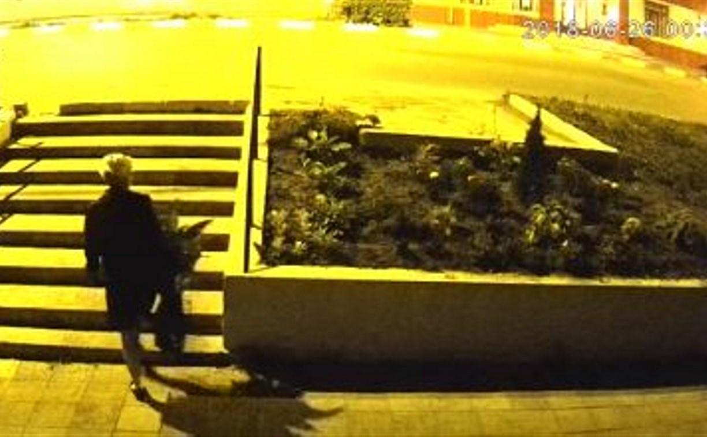 Жительница Алексина ночью похитила туи и канны: видео