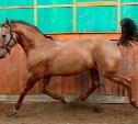 В Ясногорском районе пропал конь по кличке Бомбей