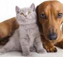 ВЦИОМ изучил отношение россиян к домашним животным