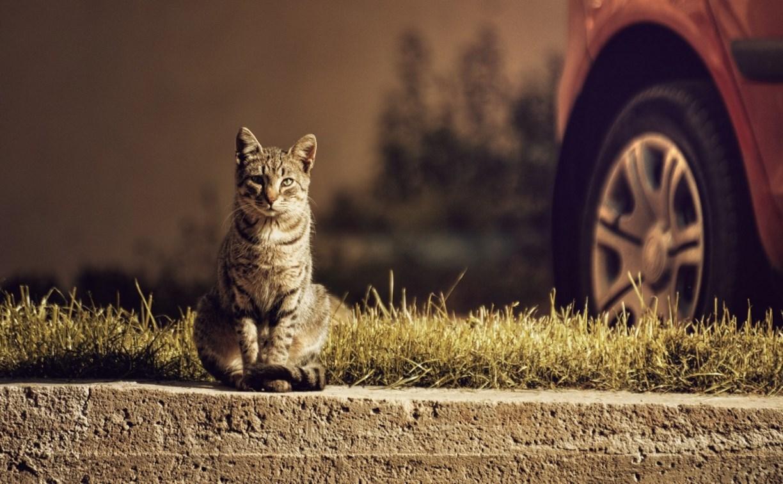 Роспотребнадзор: как влияют на здоровье туляков предприятия, кошки и мусорные баки