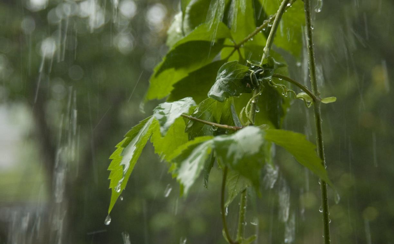 Погода в Туле 26 мая: дождливо, до 19 градусов тепла