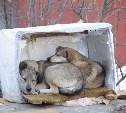 В соцсетях бьют тревогу: догхантеры угрожают массово травить собак