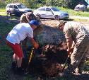 Поисковики обнаружили в Арсеньевском районе останки красного командира