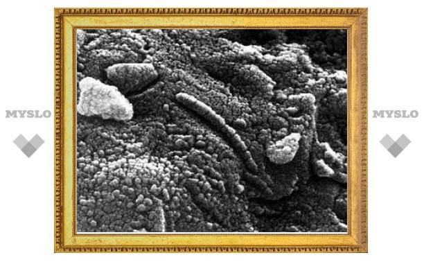 Ученые вновь нашли на марсианском метеорите жизнь