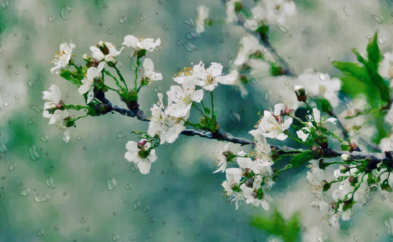 Погода в Туле 27 мая: небольшой дождь, до +18 градусов