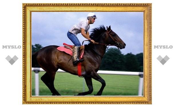 В Туле пройдут соревнования по конному спорту