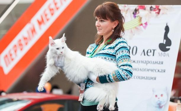 В ТРЦ Макси прошла кошачья выставка