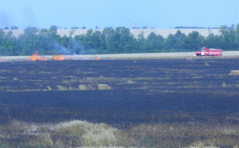 В Ефремовском районе сгорело 100 га поля