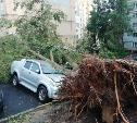 На ул. Пузакова в Туле четыре дерева упали на машины