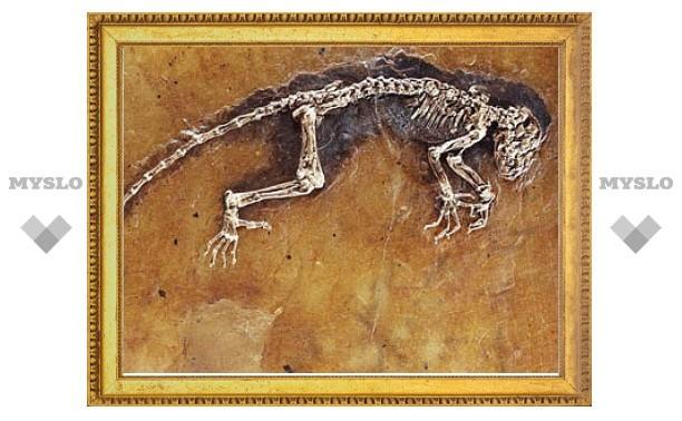 """Научную значимость """"недостающего звена"""" эволюции человека поставили под сомнение"""