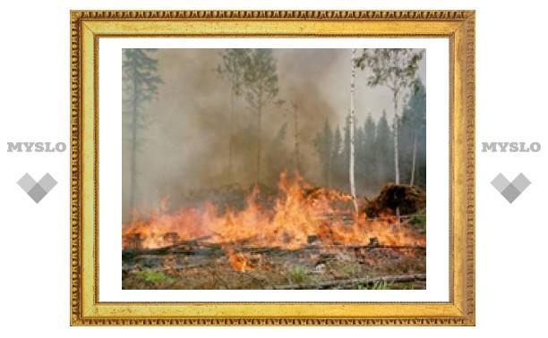 Тульской области грозят лесные пожары