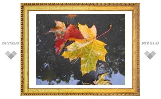 16 октября: опадают последние листья с деревьев