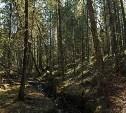 Житель Тульской области изнасиловал знакомую в лесопосадке