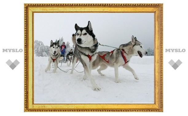 В Тульской области проходят международные гонки на собачьих упряжках