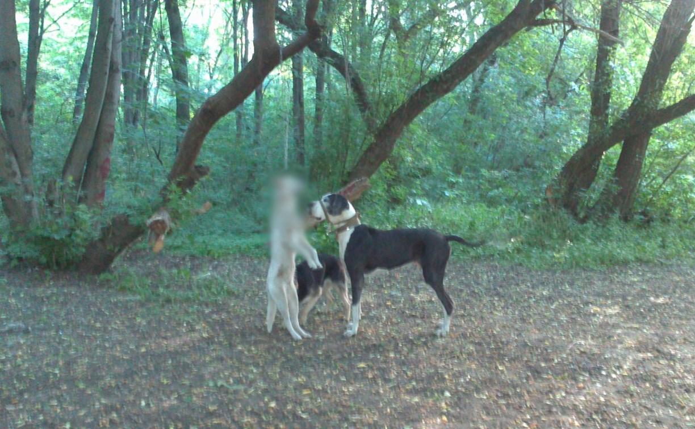 В Туле в лесу возле «Макси» нашли повешенную собаку