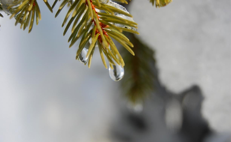 Погода в Туле 25 февраля: снег с дождем и оттепель