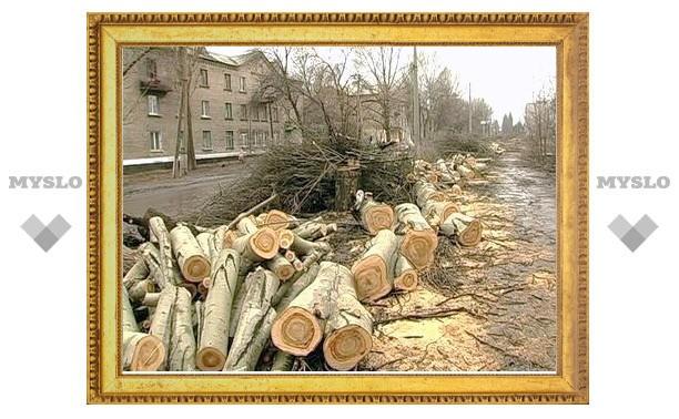 В Туле бизнесмены уничтожают деревья