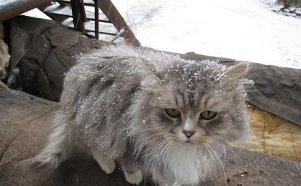 Суворовец жестоко издевался над бездомной кошкой на глазах у детей