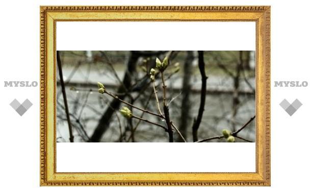 В Тулу пришла весна