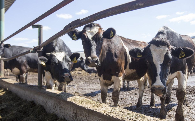Тульская ферма может уйти с молотка из-за кредитных долгов
