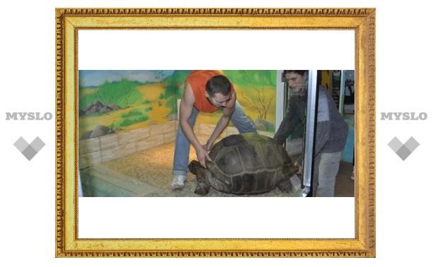 Черепахе-гиганту построили дом в Туле!