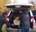 Алексинцы спасли отощавших алабаев, которых хозяин бросил на привязи: видео