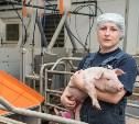 Тульская мясная компания: Как работают современные фермы