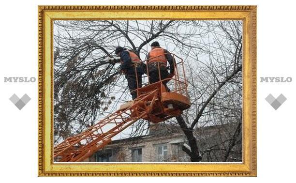 """В Туле """"подрезают"""" деревья"""