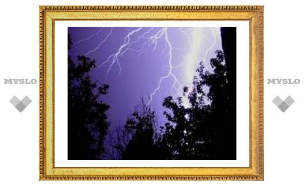 В Туле молния попала в дерево