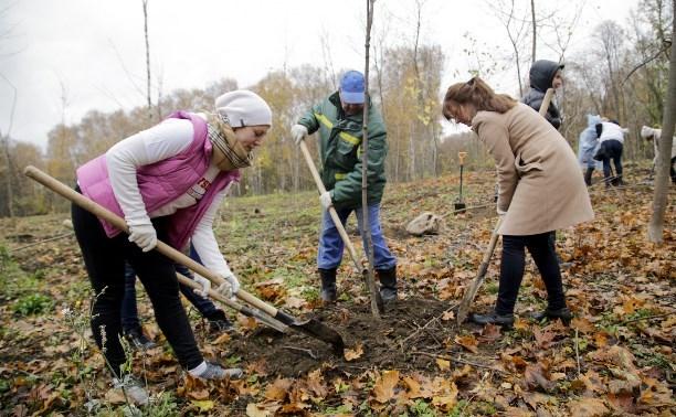 Осенью в Туле высадят 2,5 тысяч саженцев деревьев