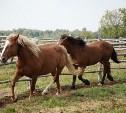 В Тульской области конокрады увели из фермерского хозяйства 5 породистых лошадей