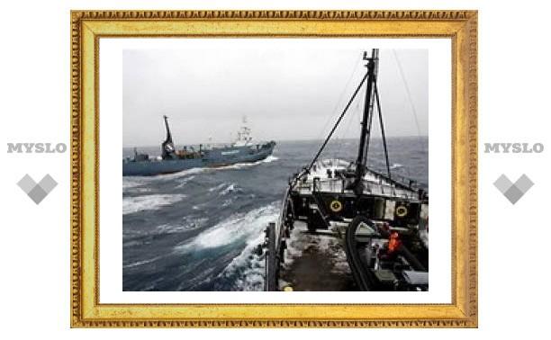 Защитники китов протаранили японский китобоец