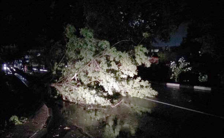 В Туле из-за шквалистого ветра рухнули 18 деревьев