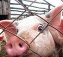 Россельхознадзор запретил ввоз свинины из Молдавии